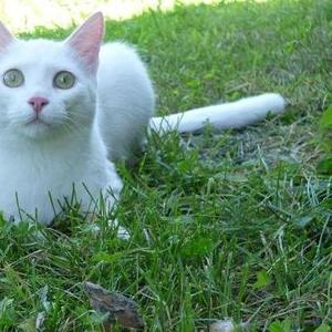 Срочно ищу добрых хозяев для молодого котика