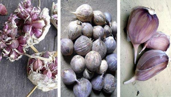 Продается чеснок для весенней и осенней посадки,  лучшие сорта 4