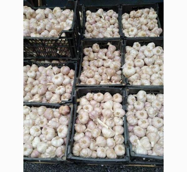 Продается чеснок для весенней и осенней посадки,  лучшие сорта 8